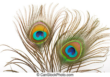 Peacock feather close up - Peacock plume close up