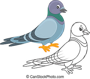 Pigeon - Gray pigeon, color and black-and-white vector...
