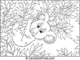 Koala - koala bear hanging on an eucalyptus branch,...