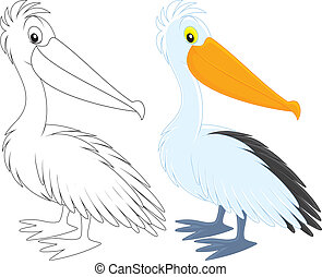 Pelican, color and black-and-white outline vector clip-arts...