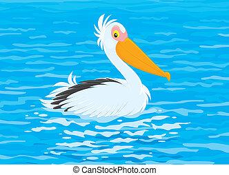 Pelican - White pelican swimming in blue water