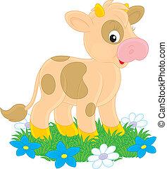 Calf - Little calf on green grass with flowers