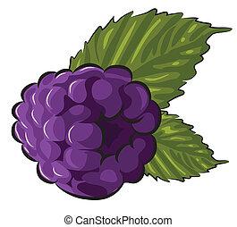 Blackberry - Fresh Blackberry isolated on white