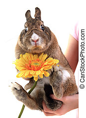 small brown bunny pet with yellow flower isolated on the...