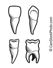 Dental design over beige background, vector illustration