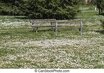 flowery meadow with daisies