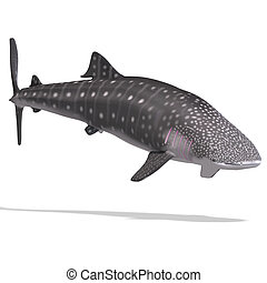 whale shark 3D render with clipping path and shadow over...