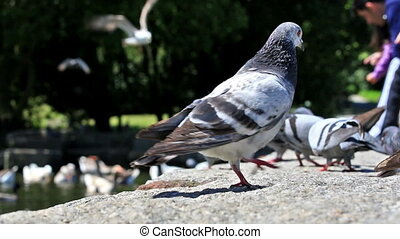 Urban doves love