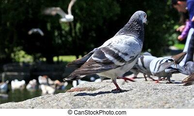 Urban doves love