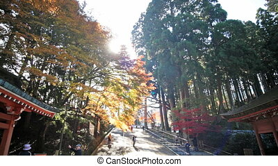 Autumn Japanese garden with maple - Kyoto, Japan - November...