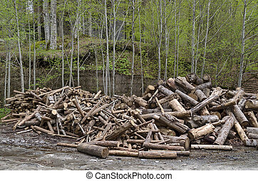 Heaped wood in Rila mountain - Heaped wood and forest in...