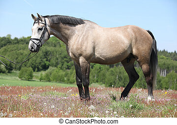 Beautiful grey horse with bridle in flowered nature -...