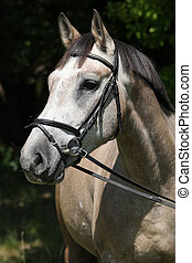 Potrait of beautiful horse with bridle in nature
