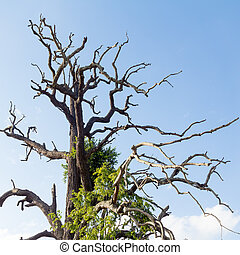 dead tree with blue sky background