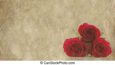 Roses on parchment banner - Three red roses on parchment...