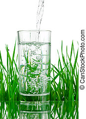 Pouring water into glass on background of green grass...