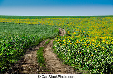Road in a field of sunflowers