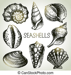 Seashells hand drawn set Sketch design elements