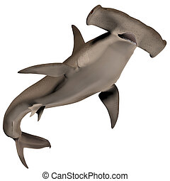 Hammerhead Shark - Hammerhead sharks usually school during...