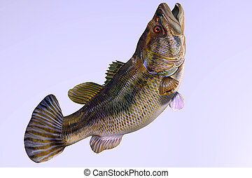 Largemouth Bass Side Profile - The Largemouth Bass is a...