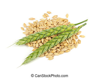 Barley Grains and Ears Isolated on White Background - A pile...