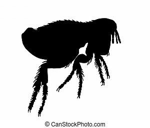 a, pretas, silueta, cão, pulga