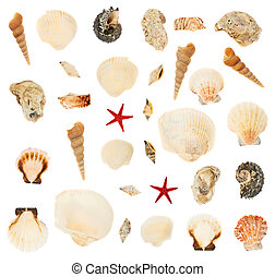 Set of multiple seashells isolated over the white background