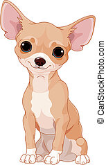 Chihuahua - Cute dog of breed Chihuahua