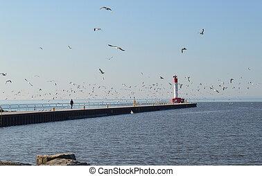 Morning walk - Man walking along pier in Oakville Harbour...