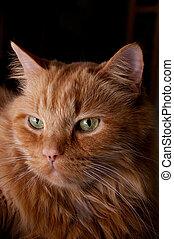 portrait of beautiful orange cat