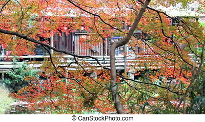 fall season of kyoto, Japan - Kyoto, Japan - November 26,...