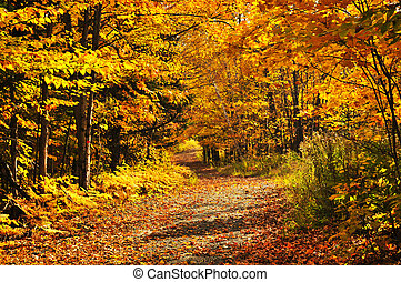 Fall forest