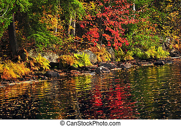 Fall forest and lake shore - Lake shore of fall forest with...