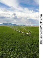campo, irrigado