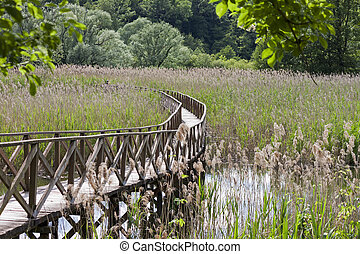 wooden footbridge in the reedbed - a wooden footbridge...