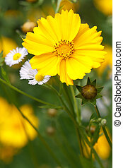 coreopsis flower on a background of wild flowers vertical