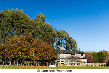 Farm Shed Trees - Wonderful colors of autumn in these trees...