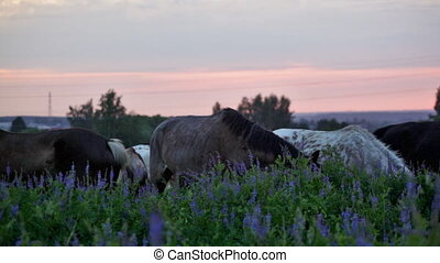 Horses eat a grass at sunrise