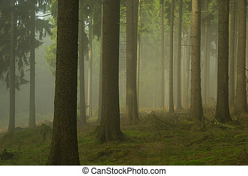 forest in fog 02
