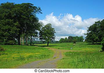 Alnwick, zamek, Drzewa, łąki