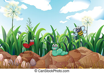 Insects above the rocks