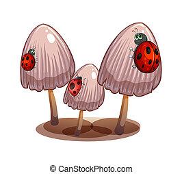 Tre, funghi, coccinelle