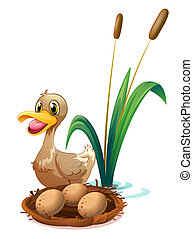 A brown duck near the nest - Illustration of a brown duck...