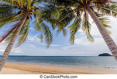 Beach coconut palm trees