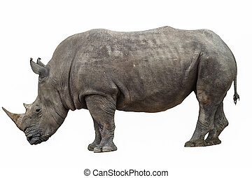 rhino on a white background - rhino on a white background