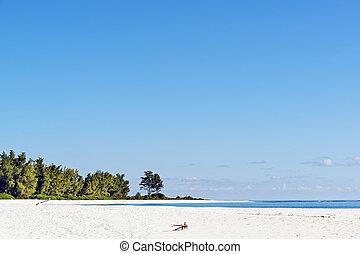 white-sand tropical beach - lovely white sand beach m Bird...