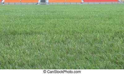 Grassy field empty stadium - Camcorder moves the grassy...