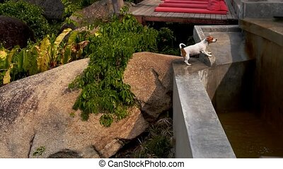 Cute Dog Playing with Water - Jack Russel Terrier Playing...