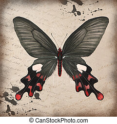 Butterfly on grunge background