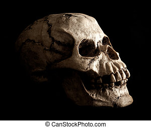 Human Skull Prop on Black Background - An aged and weathered...